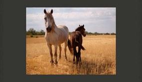 Fototapet Bimago - Horse And Foal + Adeziv gratuit 200x154 cm