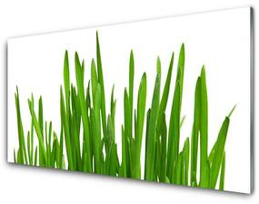 Tablou pe sticla Iarbă Floral Verde Alb