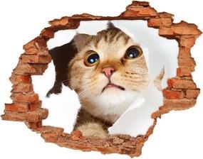 Autocolant de perete gaură 3D Cat în gaura