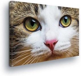 GLIX Tablou - Cat's Eye II 100x75 cm