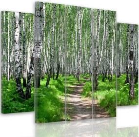 CARO Tablou pe pânză - Birch Forest 2 150x100 cm