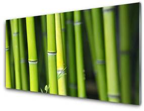 Tablou pe sticla Bamboo Natura Verde