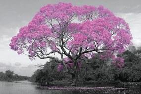 Tree - Pink Blossom Poster, (91,5 x 61 cm)