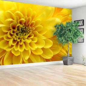 Fototapet Floare galbenă