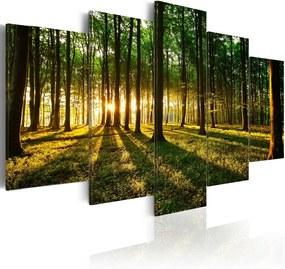 Bimago Tablou - Adventure in the woods 100x50 cm