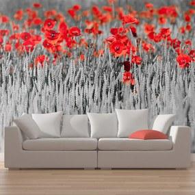 Fototapet Bimago - Red poppies on white and black background + Adeziv gratuit 450x270  cm